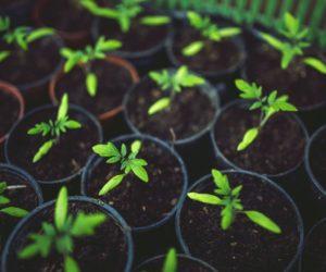 Poziv na predavanje o ekološkoj poljoprivredi