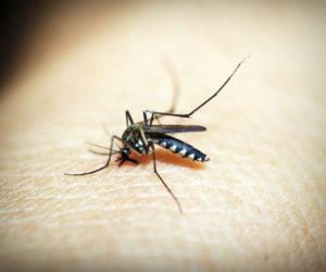 Obavijest o tretiranju komaraca