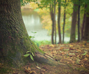 Obavijest – zabrana obaranja drveća