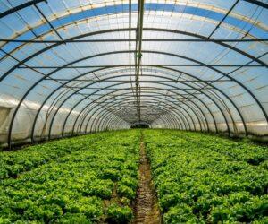 Obavijest o prezentaciji mjere 4.1.1 – uzgoj povrća u plastenicima